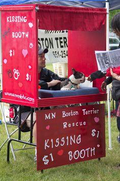 boston terrier kissing booth