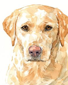 8x10 Yellow Labrador Retriever Print Limited edition print from watercolor painting  MATTED ARCHIVAL PRINT - Limited edition of 200 prints - Signed, dated, and numbered - 8x10 Print - 11x14 White Mat - Ready to gift or frame!  Print available with a pink nose (first image) or black nose (second image).  High quality, archival, long lasting paper and inks Ready to stick in a standard 11x14 frame   Need a custom portrait? Check out my Custom Painting section…