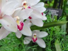 How to Get Orchids to Rebloom by Amy Renea at A Nest for All Seasons