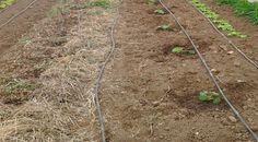 Comment déterminer simplement  la nature du sol ? | Conseils Jardinage Bio Permaculture, Plantation, Texture, Horticulture, Gardening Tips, Ph, Design, Blog, Gilles