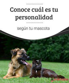 Conoce cuál es tu personalidad según tu mascota Conoce cuál es tu personalidad según tu mascota o decídete por la raza de perro que mejor se ajusta a tu personalidad, leyendo este artículo. #personalidad #raza #mascota #curiosidades