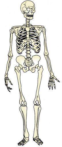 los huesos el esqueleto humano fichas infantiles del cuerpo humano para imprimir gratis para niños