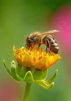 Pictures Of Insects, I Love Bees, Best Honey, Bees And Wasps, Bee Art, Children's Picture Books, Save The Bees, Bees Knees, Australian Honey