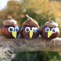 Mit Kastanien basteln Mit Kastanien basteln Kastanien Eulenparade The post Mit Kastanien basteln appeared first on Knutselen ideeën. The post Mit Kastanien basteln appeared first on Kinder ideen. Autumn Crafts, Fall Crafts For Kids, Nature Crafts, Diy For Kids, Crafts To Make, Diy Crafts, Acorn Crafts, Pine Cone Crafts, Christmas Crafts