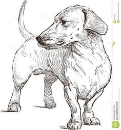 Resultado de imagen para dachshund drawing