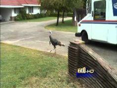 turkey attack!