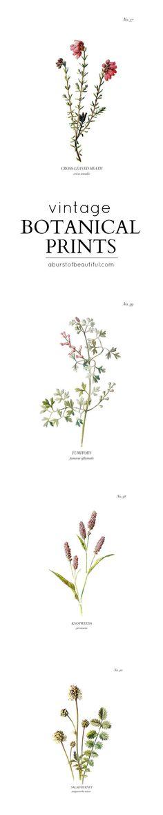 Finding DIY Home Decor Inspiration: Vintage Wild Flower Botanical Prints - A Burst of ...