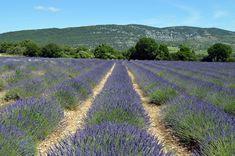 Lavender, Landscape, France, Provence, Fields, Nature