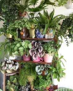 Luxurious Indoor Decorative Ideas With Plants 33 Room With Plants, House Plants Decor, Decorate With Plants Indoors, Living Room Plants Decor, Easy House Plants, Hanging Plants, Indoor Plants, Indoor Gardening, Organic Gardening