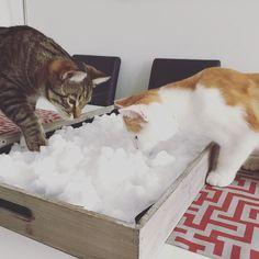 Wohooo. What's this? First snow in Salzburg!  #luckythecat #charliethecat #love #cute #catsofsalzburg #salzburg #austria #cat #cutecatcrew #ilovemypet #catlovers #lovekittens #instapet #catsagram #kitten #kitty #catstagram #kittycat #catsofinstagram #ilovemycat #catlove #catoftheday #furry #cats_of_instagram #cats #catlife #katze #katzenliebe #firstsnow #snow