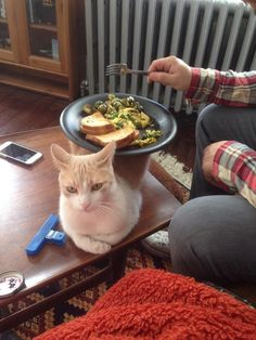 This cat who realized her life-long dream to become a table. | 37 Cats Who Totally Won 2014