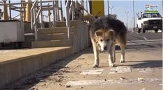 """After receiving a call about a senior dog living in a water treatment facility, <a href=""""https://go.redirectingat.com?id=74679X1524629"""