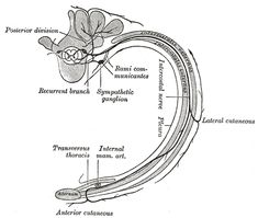 15 Best Chapter 13: The Spinal Cord, Spinal Nerves, and