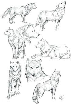 Wolf draw