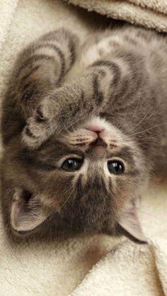 Cutest-Kitten-