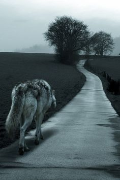 Do I walk this path alone humans? Will the end of this path mean my destruction? All I want is the right to live in peace! Is that not what you want for your life and children? Walk with me, please, for I have many things to teach you. Listen to my song...listen to my broken heart!