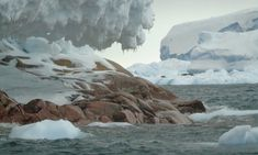 HELDER BARROS: Ambiente e Ecologia - A ilha, entretanto batizada ...