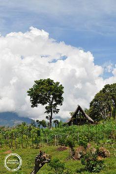 Barichara Tabakfelder