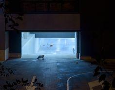 """Photographe installé à Anvers en Belgique, Jan Pypers vient de publier une nouvelle série de photographies intitulée """"Nightgardeners""""."""