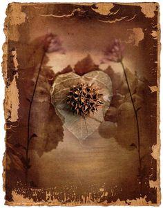 Prickly Heart, 2003 Richard Tuschman