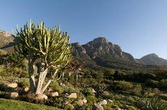 Jardin Botanico Nacional Kirstenbosch, Sudafrica