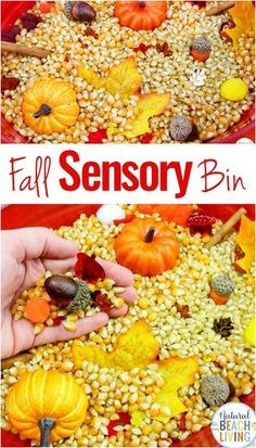 Fall Sensory Bin for Toddlers and Preschoolers, A Fall Sensory Bin is the perfect way for children to explore the fall season. Sensory activities are full of ways kids can learn about textures, sounds, smells, and colors. Easy fall sensory idea for kids Fall Sensory Bin, Sensory Tubs, Sensory Boxes, Sensory Play, Autumn Activities For Kids, Sensory Activities Toddlers, Toddler Preschool, Motor Activities, Halloween Activities For Toddlers