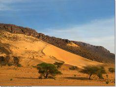 Coline aux acacias en Mauritanie
