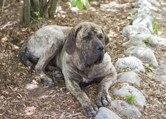 Tata Harper's incredible dog Juliet. #bestfriend