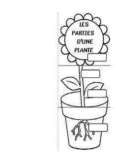 Cp Plantes