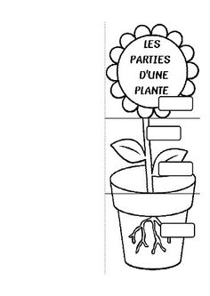 parties-d-une-plante et autres