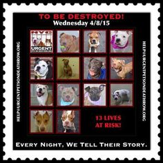 Dedicated to Saving NYC Shelter Animals Shelter Dogs, Animal Shelter, Animal Rescue, Types Of Animals, Rainbow Bridge, The Victim, Funny Animal Pictures, Animal Rights, Beautiful Babies