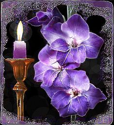 Beautiful Flowers Images, Flower Images, Good Morning Sunday Images, Beau Gif, Welcome Images, Best Candles, Candle Lanterns, Xmas Cards, Art Forms