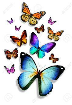 Beaucoup de papillons différents, isolé sur fond blanc