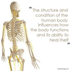 Chiropractic focuses on the relationship between structure (primarily the spine) and function (as coordinated by the nervous system) and how that relationship affects the preservation and restoration of health. Chiropractic Office, Family Chiropractic, Chiropractic Wellness, Wellness Clinic, Neck And Back Pain, Neck Pain, Musculoskeletal System, Regenerative Medicine, Pregnancy Care