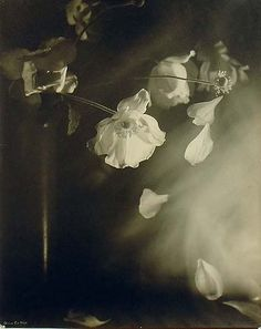 poboh: Lily, ca 1938, Olive Cotton. Australian Photographer (1911 - 2003)