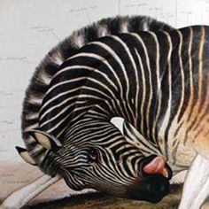 Walton Ford, Quagga (detail) from Hide Trade.The American naturalist painter Walton Ford skillfully creates highly detailed, dynamic scenes where naturalism meets surrealism. His animal creations are technically on point; however, they are often portrayed in a very surrealistic manner - oftentimes leaning towards the grotesque. His paintings are thought provoking, often containing a deeper philosophic or moral message. But they are mostly visually stunning and highly intriguing.