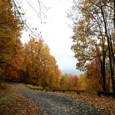 Fall Color - Tips for Leaf Season - Blue Ridge Parkway. Leaf forecasts, the biology of fall color, regional reports and more!
