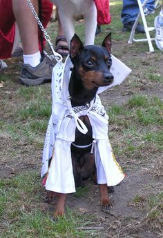 Bark in the Park San Jose Plans Largest US Dog Festival Largest Dog, Dog Costumes, Travel News, San Jose, Dog Friends, Funny Dogs, Chihuahua, Festivals, Special Events