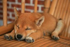 Adorable - I can remember Spirit sleeping like this as a puppy