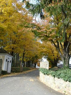 Charlottesville in the Fall