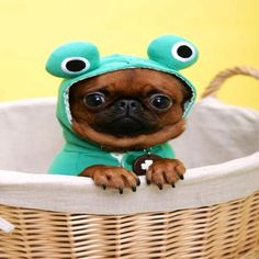 This Pin was discovered by wuvely. Discover (and save) your own Pins on Pinterest. | See more about Dogs.
