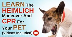 If your dog or cat is choking, you need to approach him carefully, as he's probably scared and more apt to bite -- if necessary, apply the Heimlich maneuver. http://healthypets.mercola.com/sites/healthypets/archive/2015/01/14/pets-heimlich-maneuver-cpr.aspx