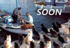 Katten wachten op de vissersboot