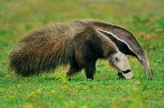 la trama - 4th alfonos urbina es cuando van con el oso hormiguero a pedirle ayuda