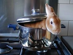 Image result for rabbit in pot