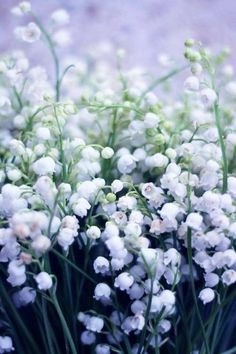 muguet porte-bonheur du Mai, (May good-luck lily-of-the-valley),