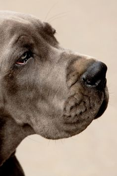Dog  The sadness in this dog's eyes just say it all....can't you just FEEL it?.....dj