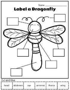 Printable Preschool Bug Activities For Learning & Fun Insect Unit Study Insect Crafts, Bug Crafts, Insect Activities, Preschool Activities, Preschool Bug Theme, Insect Games, Preschool Learning, Homeschool Kindergarten, Kindergarten Worksheets