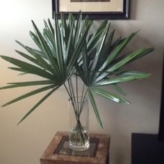 Easy and free tropical decor