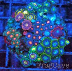 #coral #reef #tank www.fragcave.com